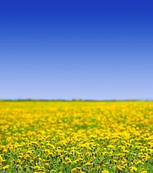 夏の牧草地