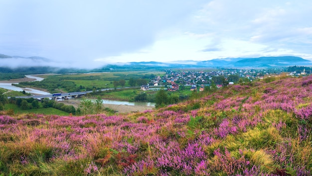 Summer misty morning country foothills panorama with heather flowers