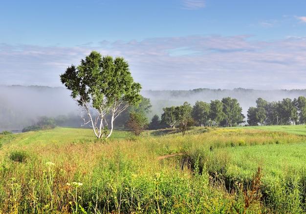 Летнее утро в поле береза под голубым небом густая трава на зеленом лугу