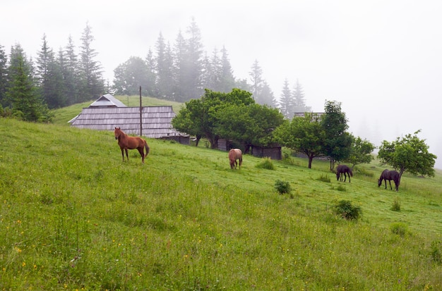 Summer mountain blossoming green meadow with farmhouse and horses