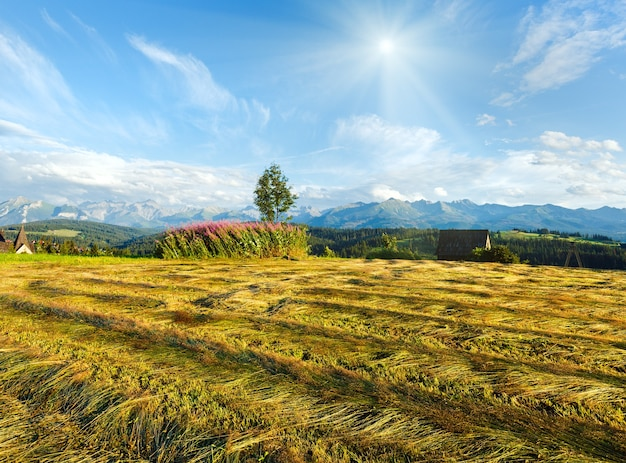 Summer mountain evening country view with mown field and lonely tree and tatra range behind (gliczarow gorny, poland)