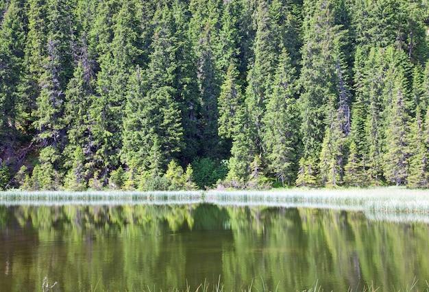 Summer mountain lake marichejka and fir forest reflection (ukraine, chornogora ridge, carpathian mountains)