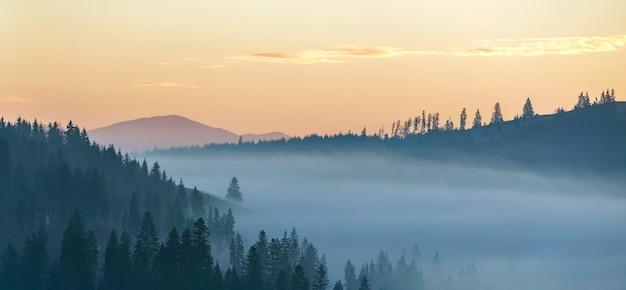 Летний горный пейзаж. туман утра над голубыми холмами горы покрытыми плотным туманным елевым лесом на ярком розовом небе на космосе экземпляра восхода солнца.