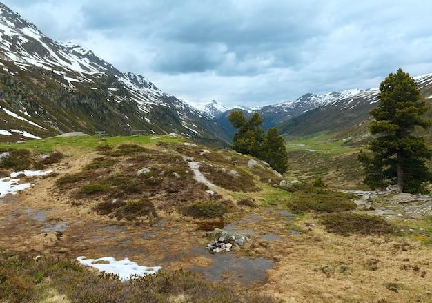 ベンチと松の木のある夏の山の風景(スイス、フルエラ峠)