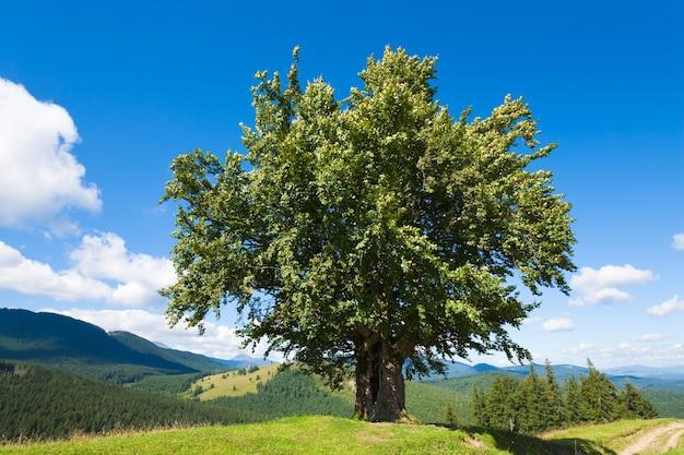 大きな孤独な木と夏の山の風景