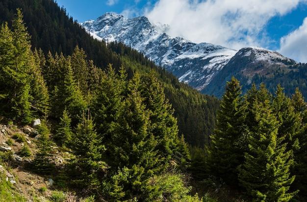 Summer mountain landscape with fir forest on slope (silvretta alps, austria).
