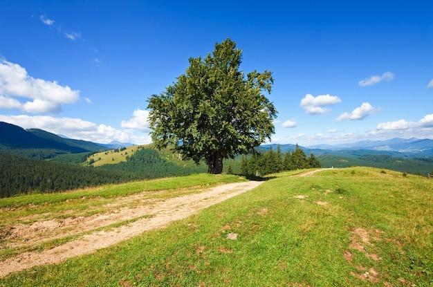 田舎道と孤独な木と夏の山の風景