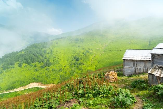 トルコ、アルトヴィンのある夏の山高原霧の高原