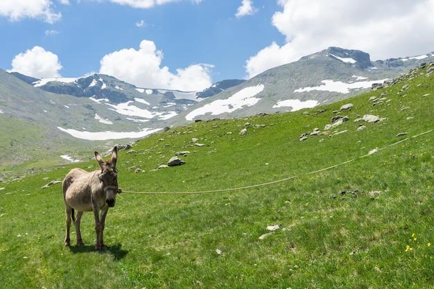 ハイランドギレスンへの夏の山の景色-トルコ