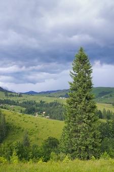 高いモミの木と嵐の雲と夏の山の景色