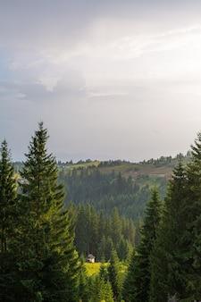 Летний пейзаж природы карпат.