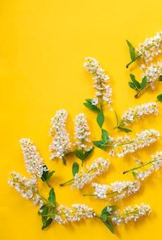 노란색 패턴에 새 벚꽃 흰색 꽃 여름 또는 봄 배경
