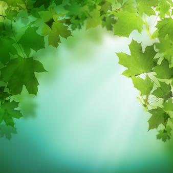 緑の葉と夏または春の緑の背景