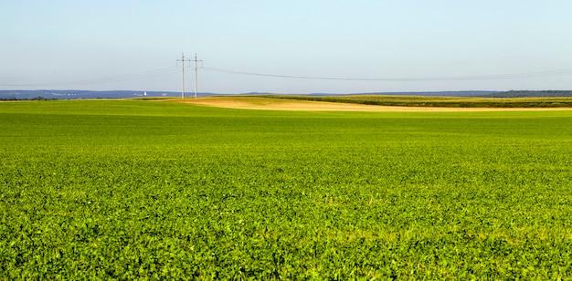 さまざまな緑の植物の夏または春の風景
