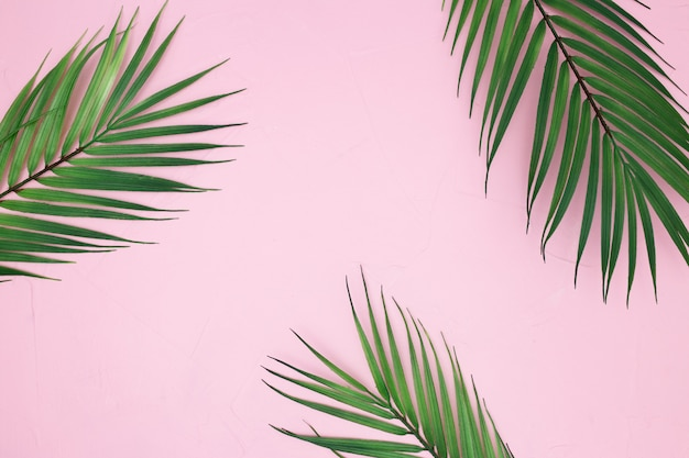 Summer palm leaves on pink background