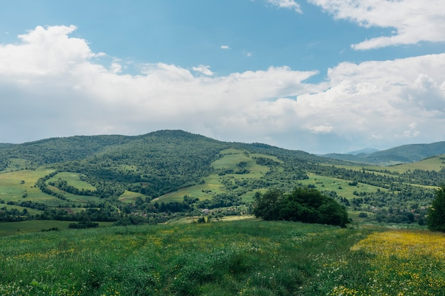 Summer panorama of mountains in the carpathians