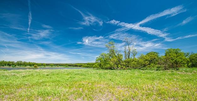 Летняя панорама с деревьями луг и небо с пушистыми облаками
