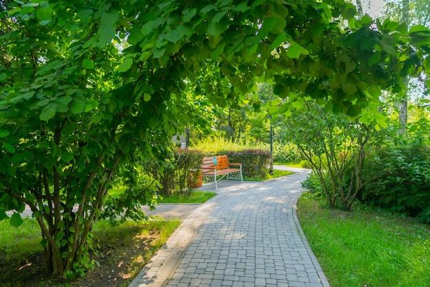 Летний парк деревья и аллеи в солнечный день.