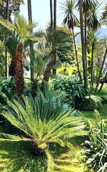 Летний парк с пальмами.
