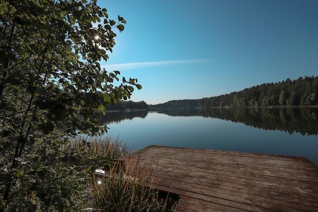 Летний мирный пейзаж с деревом на переднем плане, лес на горизонте, вода, озеро, чистое небо.