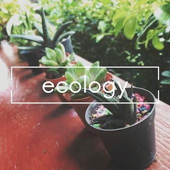 夏の植物生態学植物の概念