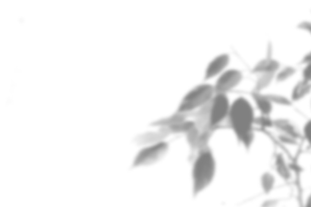 Summer plant shadow background. shadow of an exotic plant on a white wall. white and black for superimposing a photo or mockup