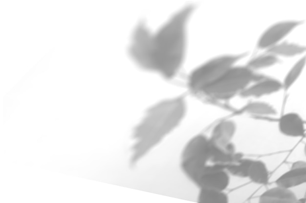 Summer plant shadow background. shadow of an exotic plant on a white wall. white and black for superimposing a photo or mockup.