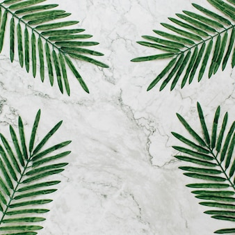 Summer plants with copy space on marble background.