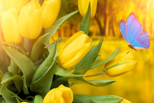 여름 엽서입니다. 여름에 공원에 파란 나비가 있는 노란 튤립. 고품질 사진