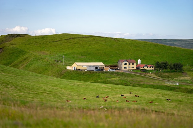 Летний сельский пейзаж из коров и фермы, рассвет над холмами, вытянутый формат.