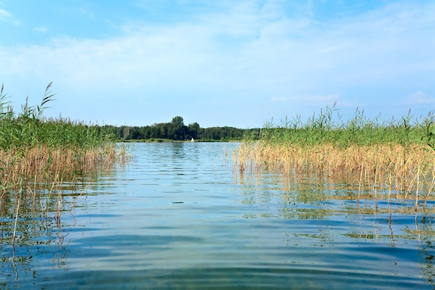 水面に植物と夏の急いで湖の景色