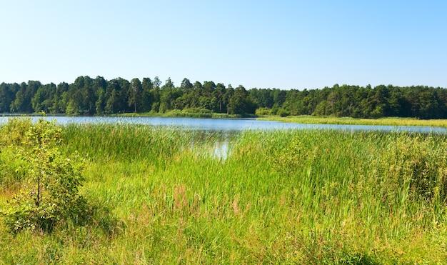 反対側の岸に小さな木立がある夏の急いで湖の景色