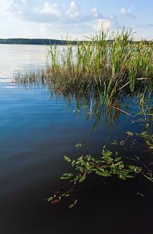 水面にいくつかの植物がある夏の急いで湖の景色
