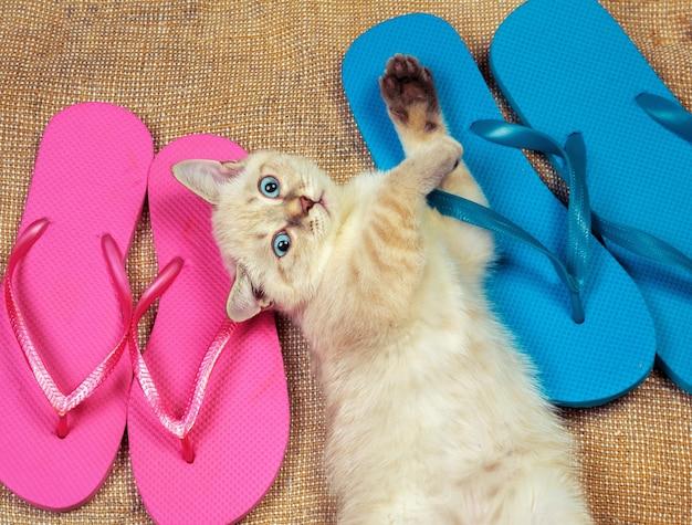 夏のシーン。ビーチサンダルを履いた子猫