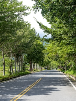 Summer scene, road with leaves and trees on the sides.