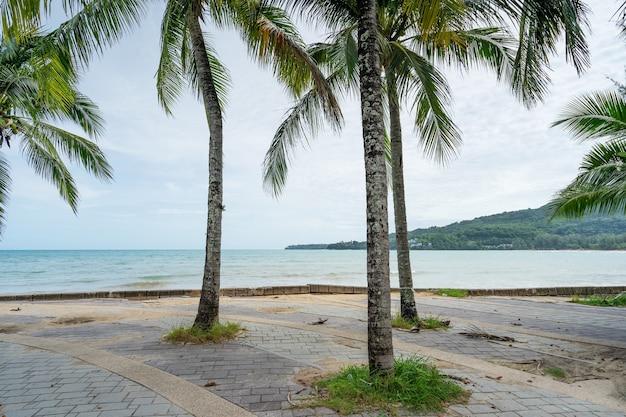 여름 시즌 배경 놀라운 코코넛 야자수 아름 다운 자연 열 대 배경 아름 다운 자연 또는 여행 웹사이트 배경입니다.