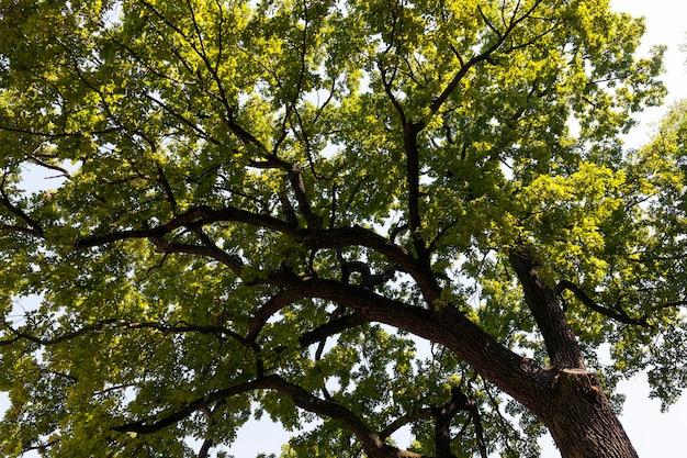Летний сезон с зеленой листвой на растениях, деревья, покрытые зеленой листвой летом