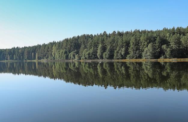 Летний безмятежный пейзаж с зеленым лесом, его отражение в речной воде, ясное голубое небо, горизонт