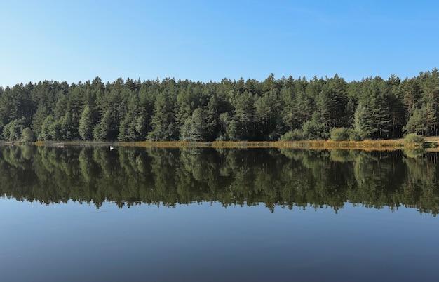 Летний безмятежный пейзаж симметрии и гармонии с отражением зеленого леса в прозрачной воде озера ...