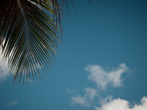 夏の空の背景