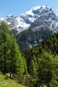 전나무 숲과 산 정상에 눈이있는 여름 stelvio pass (이탈리아)