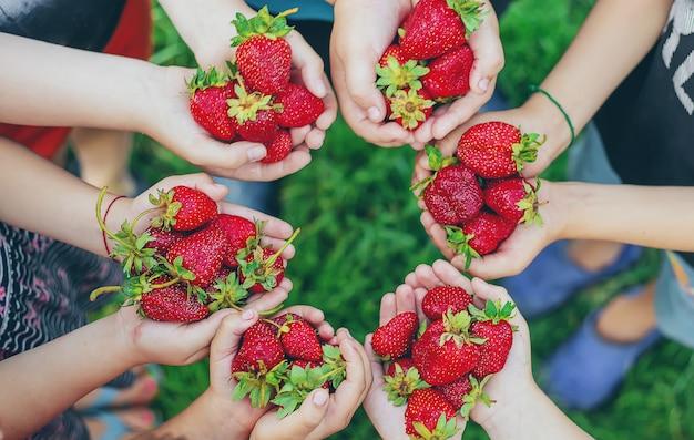 子供たちの手で夏のイチゴ