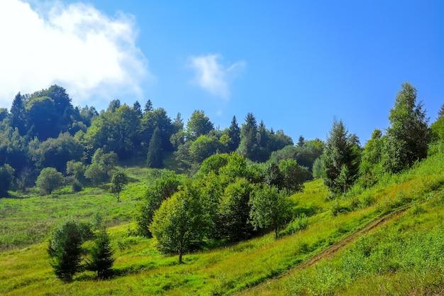 夏の日当たりの良い丘の中腹。厚い緑の草の中の田舎道。さまざまな木や茂み。青い空の雲
