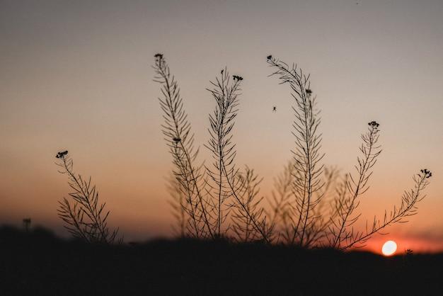 Летний закат в розовом и оранжевом небе за силуэтом дикой травы, летний закат фон