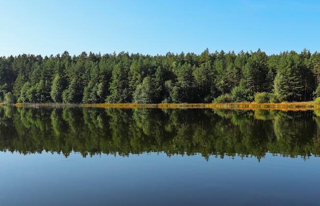 Летний пейзаж симметрии и гармонии с зеленым лесом, его отражение в речной воде, ясное голубое небо.