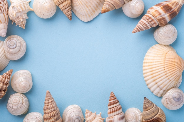 Summer texture, copy space, seashell top view, blue background