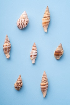 Summer texture pattern, spiral seashell top view, blue background