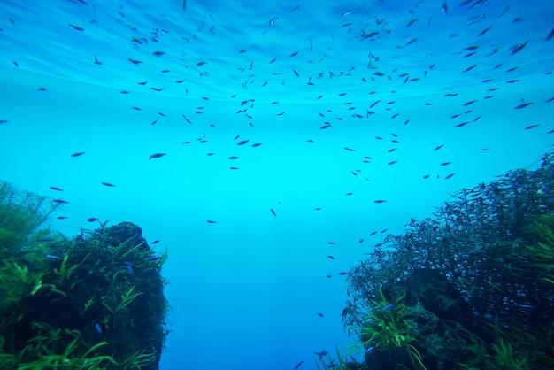 Summer. texture of water surface. underwater background. waves effects. blue underworld. ocean, sea. diving. blue sea pool water. bottom view.