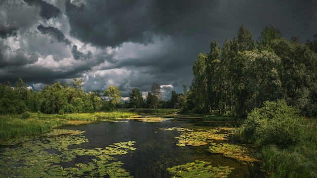 Summer thunderous landscape with a river, water flowers, forest and dark dramatic clouds