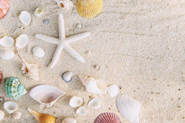Summer time concept with sea shells and starfish on the beach sand white table. free space for your decoration top view.